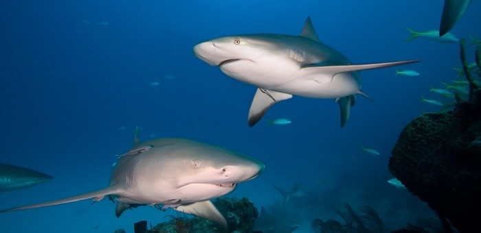 What Sharks Can Teach Us about Shame, Blame and Bullies at Work