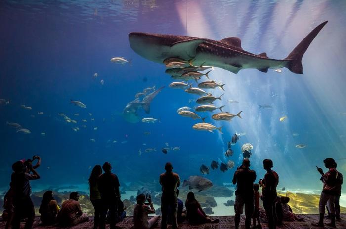 Sharks and shame